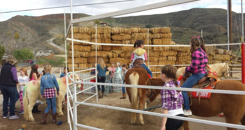 Fun Friday: Gilchrist Farm-Pony & Wagon Rides-Petting Zoo